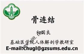 中山大学 人体解剖学 36讲 初国良 视频教程
